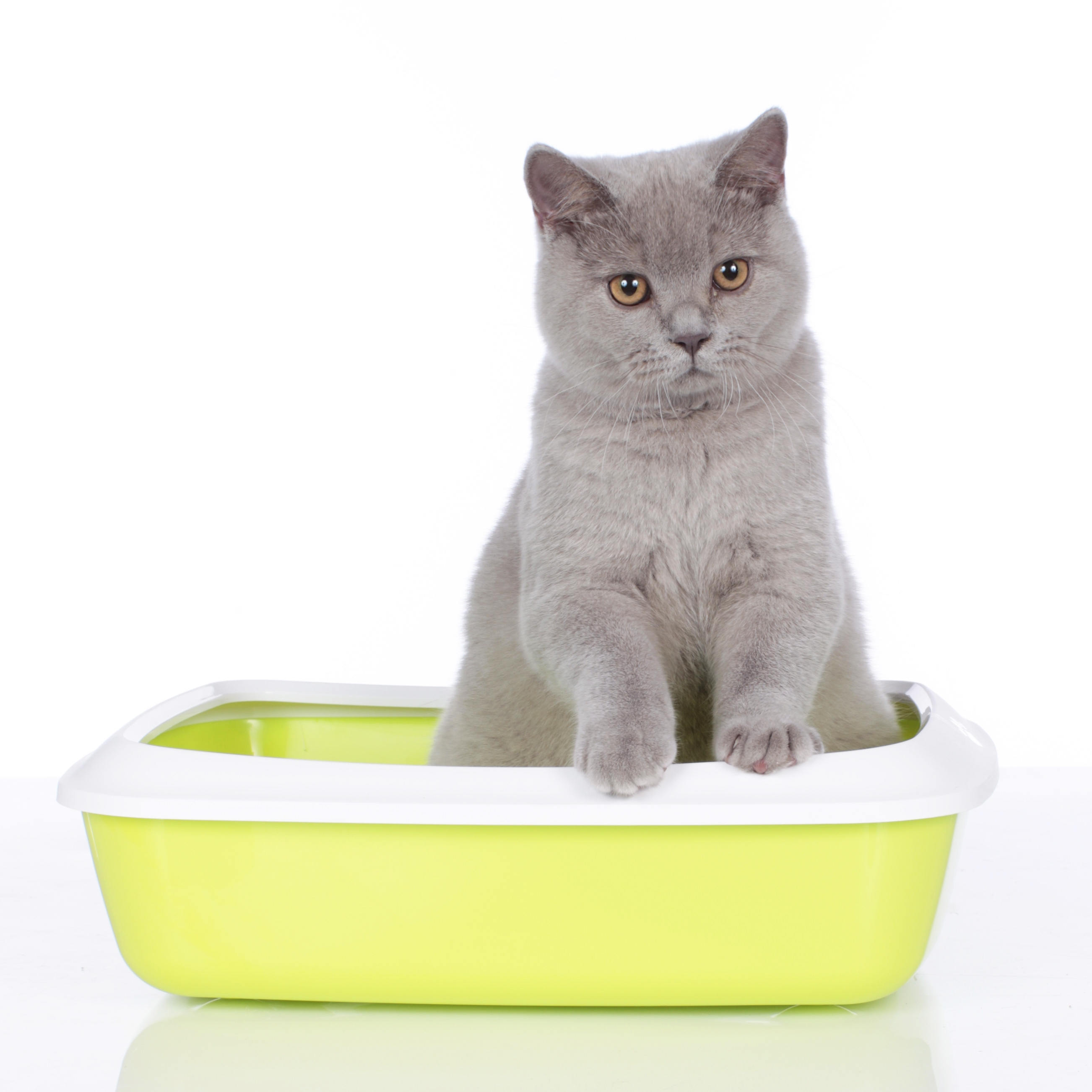 basic litter box rules