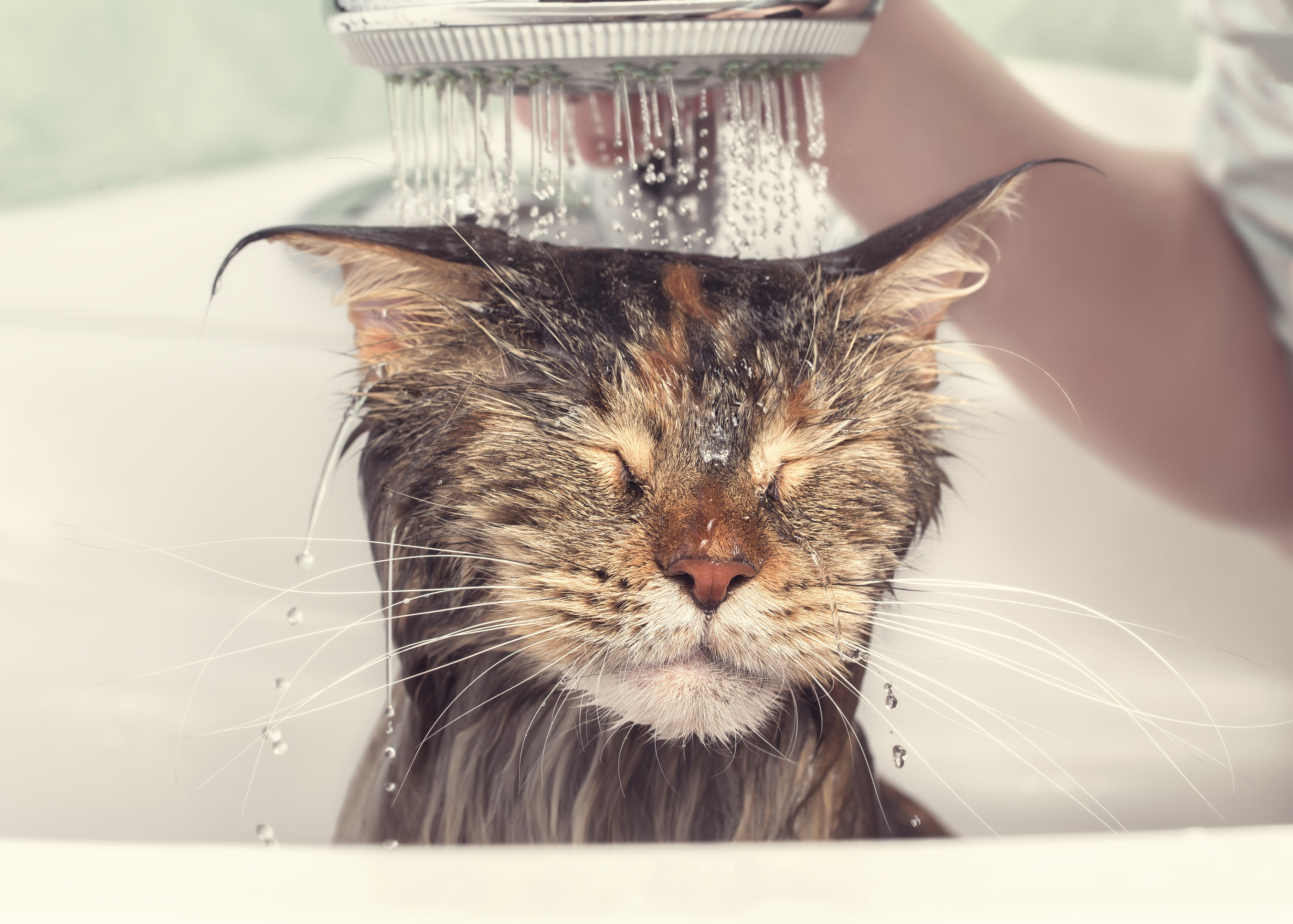 eco-friendly shampoos/flea treatments