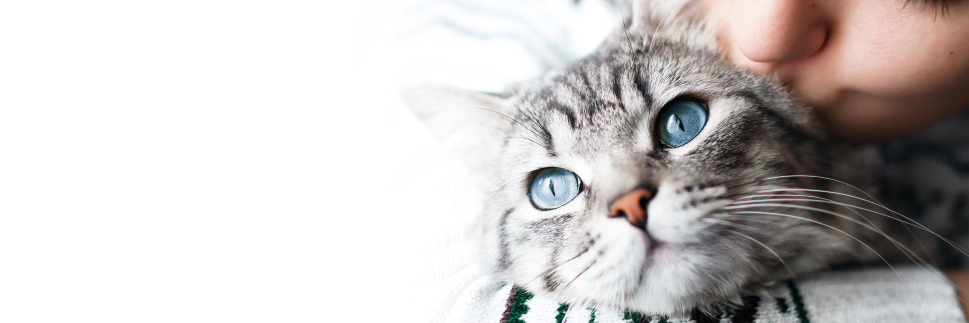 cat care, happy and healthy kitty, preventative care