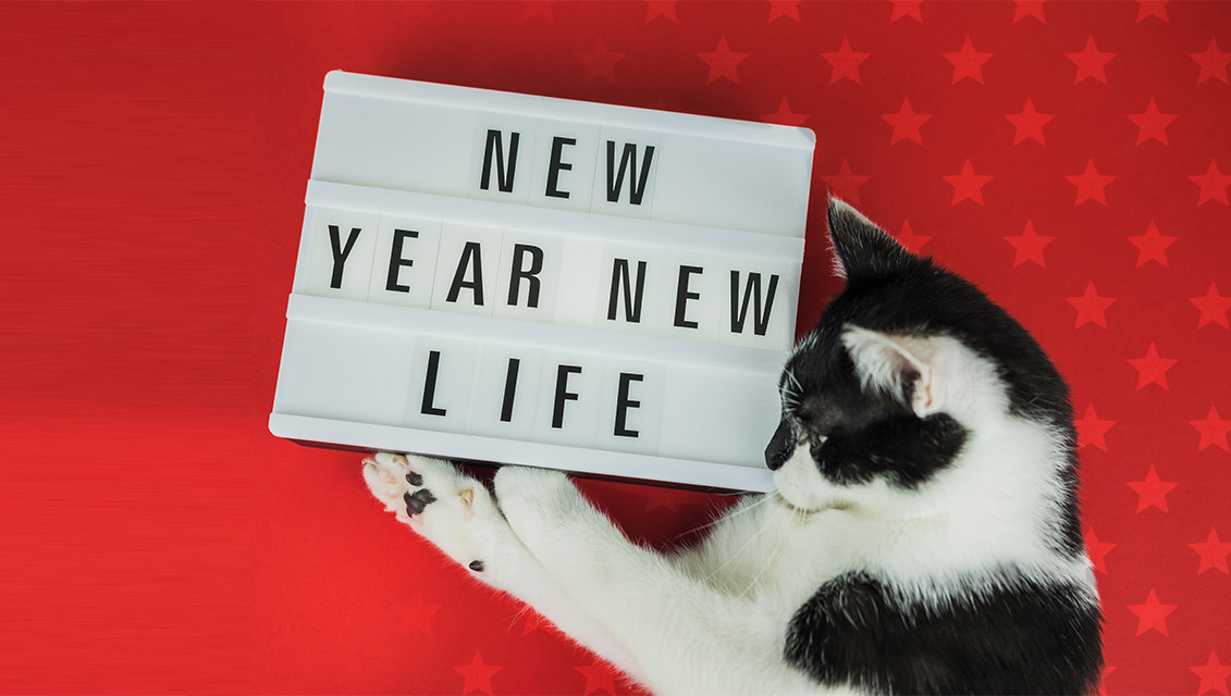 resolutions for cat owners, new years resolutions, cat owner resolutions