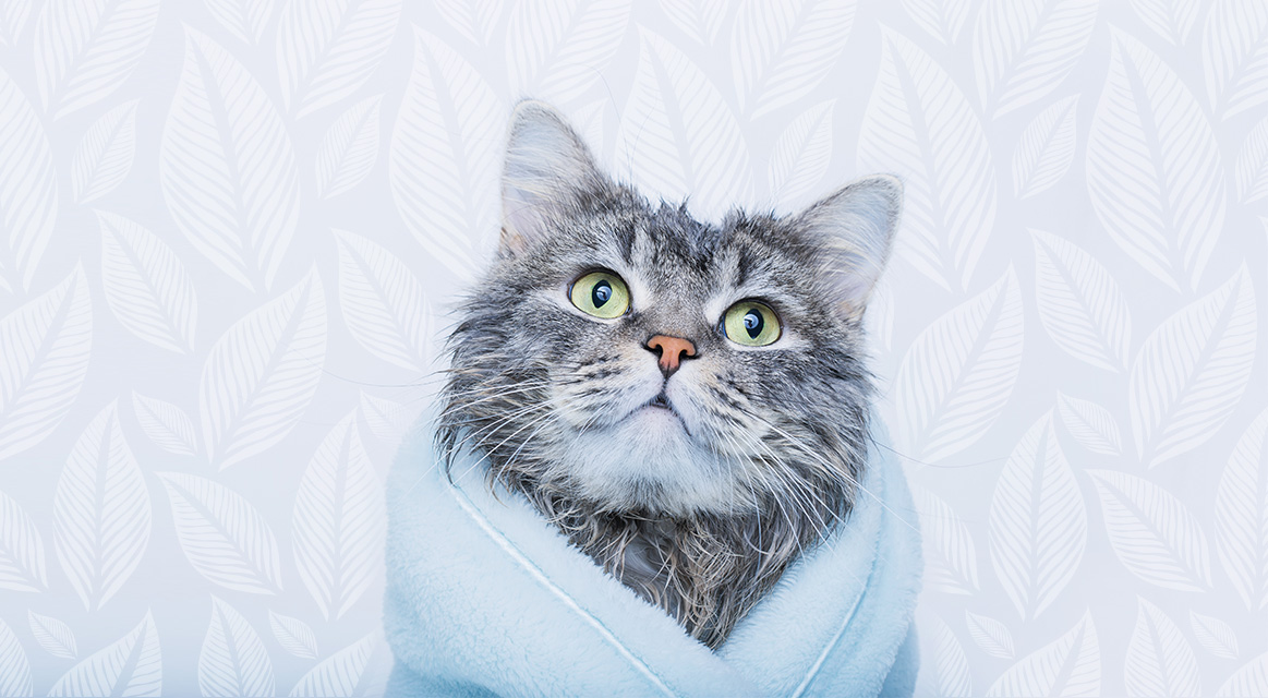 eco-friendly cat, environmentally friendly cat, green cat products, healthy cat products, eco-friendly cat products