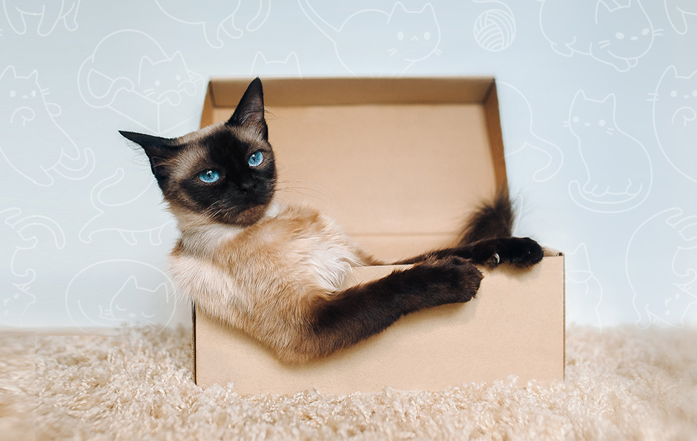 cat care, cat care tips, simple cat care tips, how to be a better cat parent, better cat owner