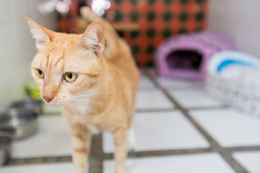 donate used items to a local cat shelter