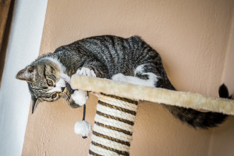 young cat plays with an eco-friendly toy mouse on an upcycled cat tree