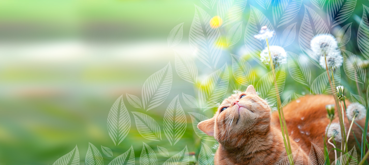 Exercise that green thumb by setting up a mini cat herb garden at home. These plants are non-toxic to cats and beneficial to their physical and mental well-being.
