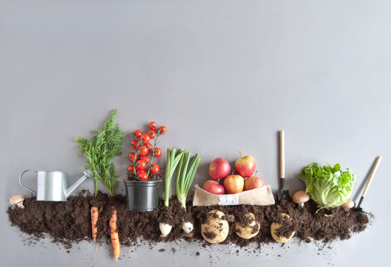 Organic fruits and vegetables growing in compost, what does organic really mean?