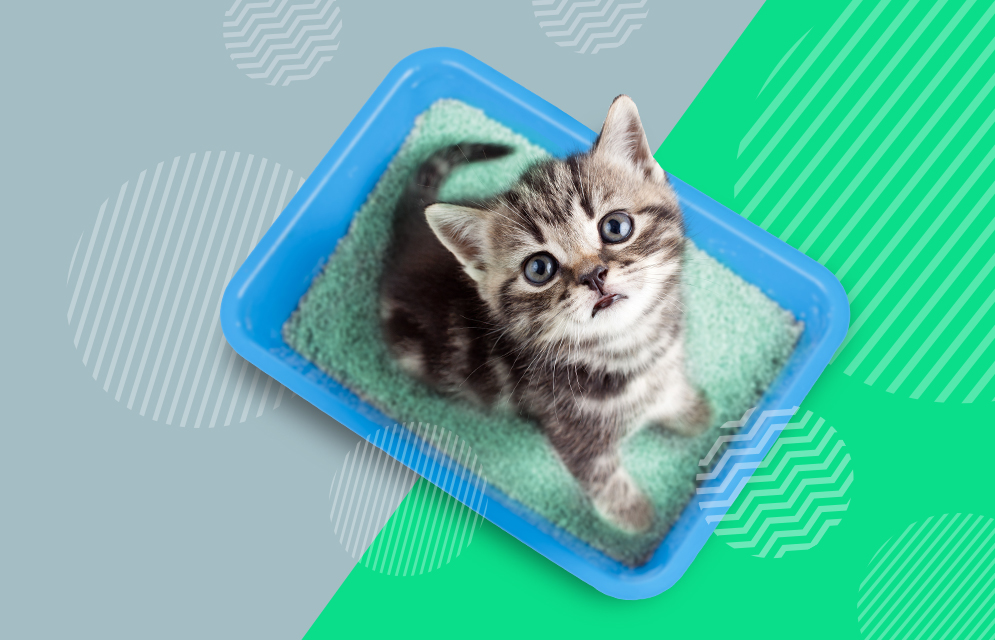 litter box, cats in litter box, cats sitting in litter box, cats playing in litter box