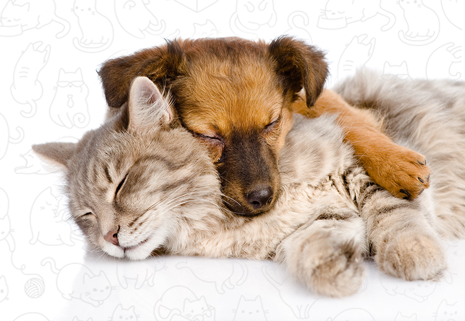 cat shelter, adopt a cat, cat fosters, make a difference, animal shelters, humane society
