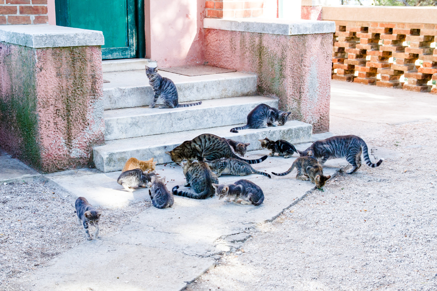 you can help by feeding local stray cats