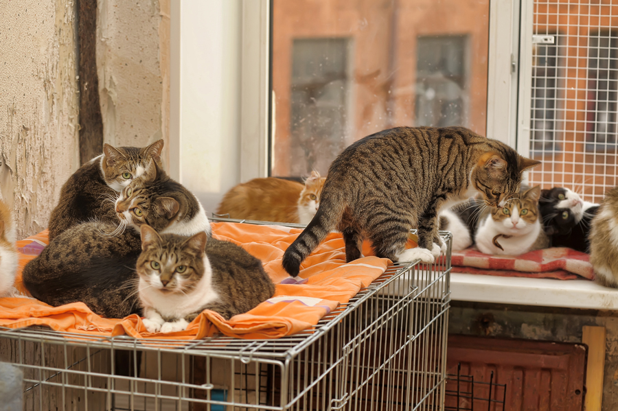 there are plenty of cat shelters looking for foster parents