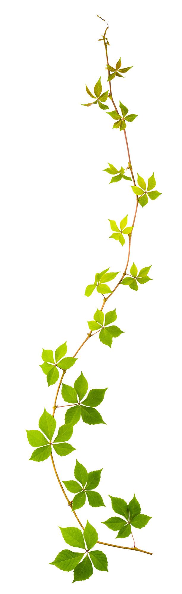 Grön miljöväxt