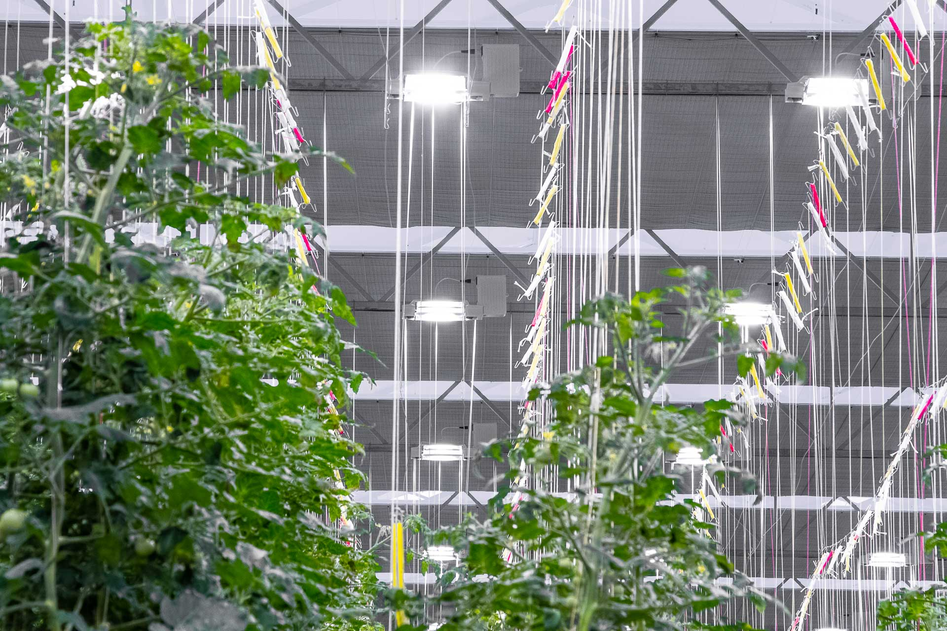 Derde generatie elektronische groeilichtarmatuur | Industria Horti Lighting