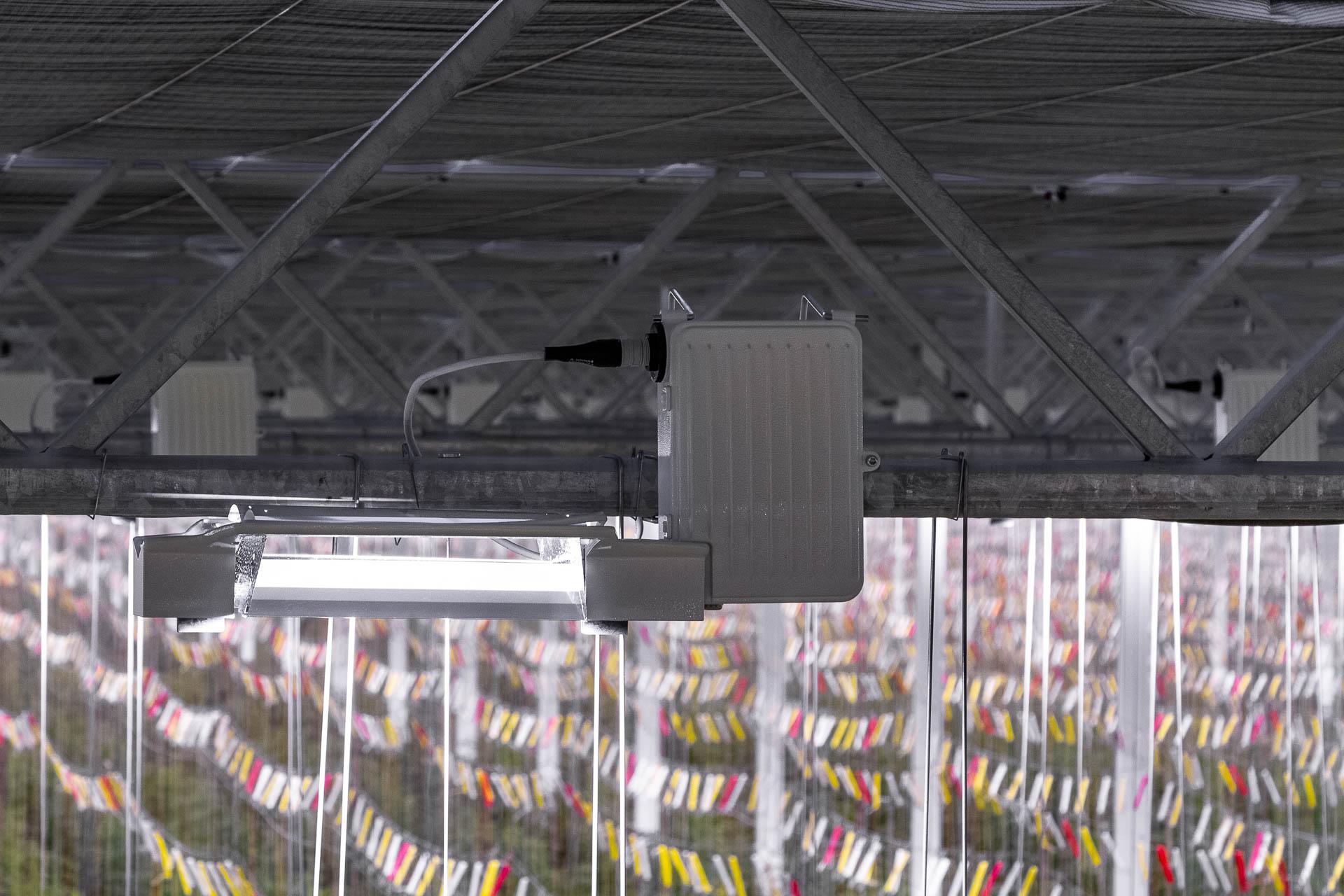 Royalpride maakt gebruik van de Indupar HPS groeilichtarmaturen van Industria Horti Lighting