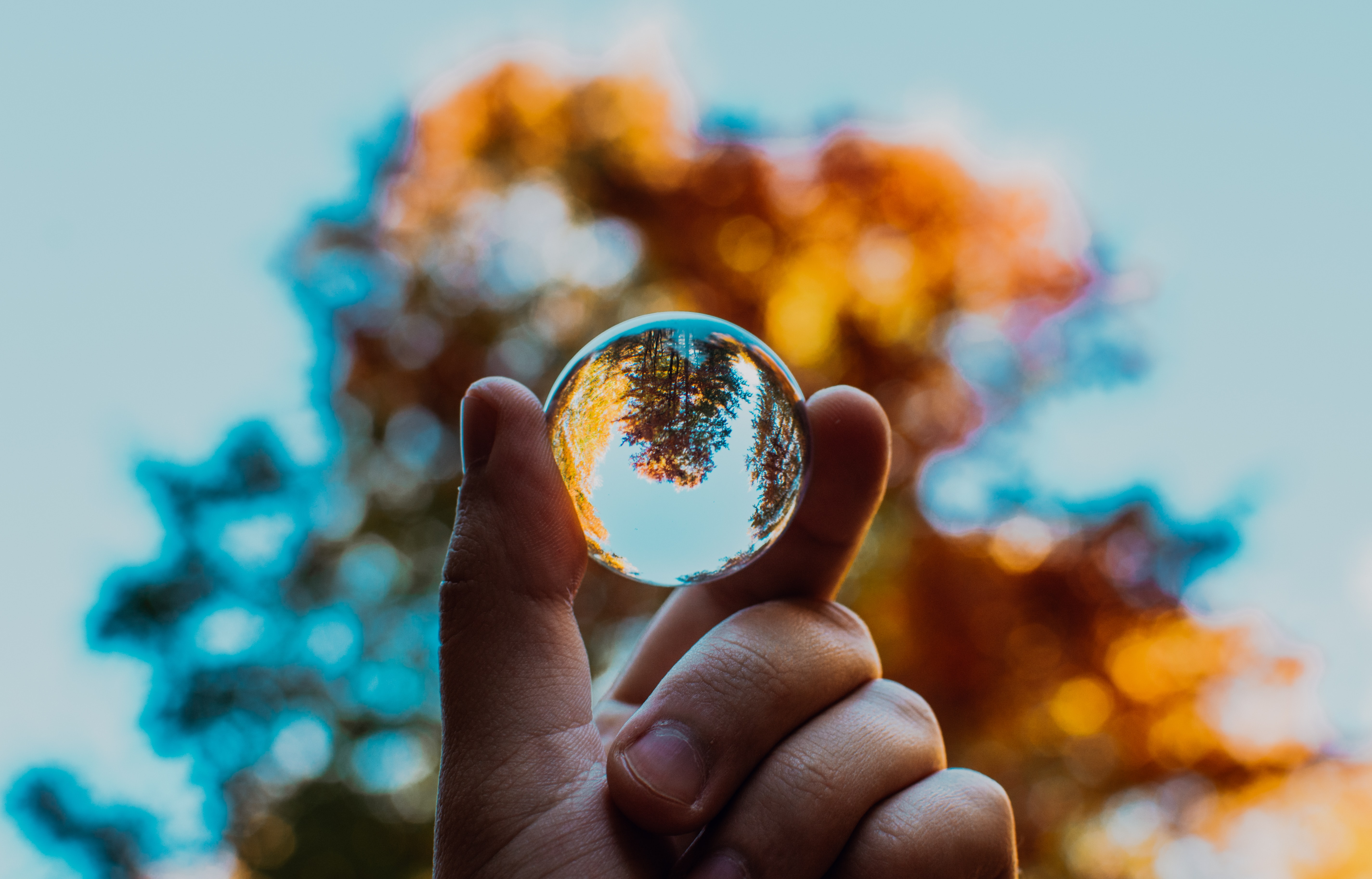 Person holding a glass ball that is reflecting the tree behind it