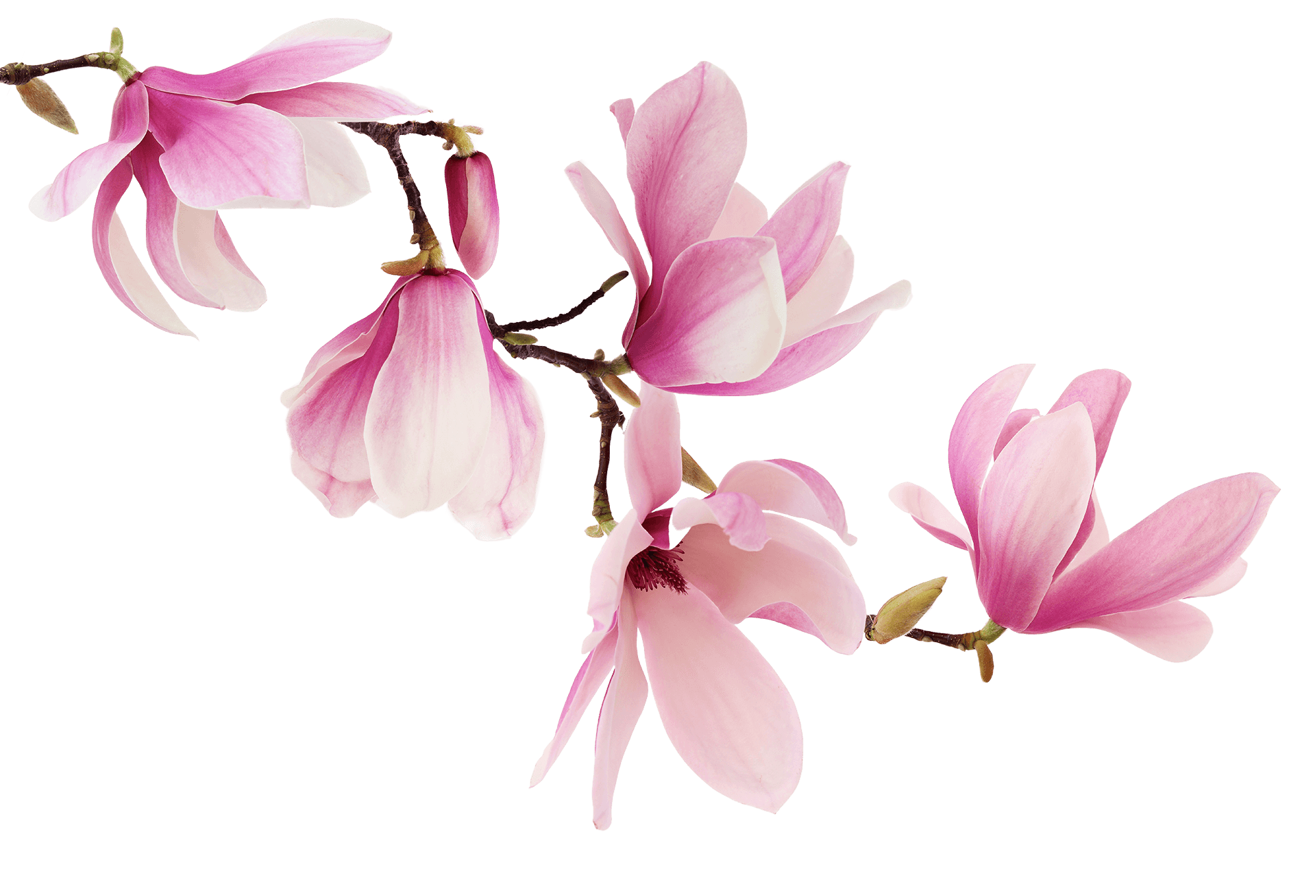 Stemningsbilde blomster