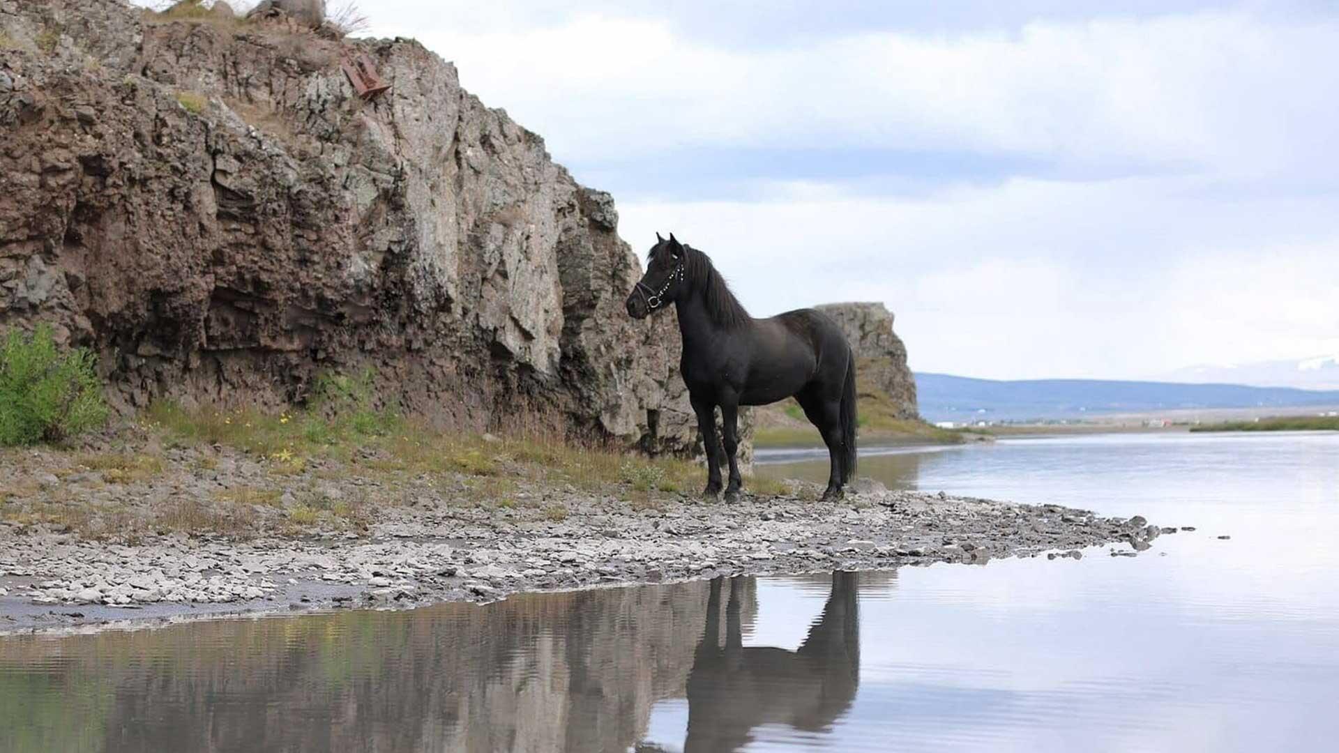 Hestaferðir