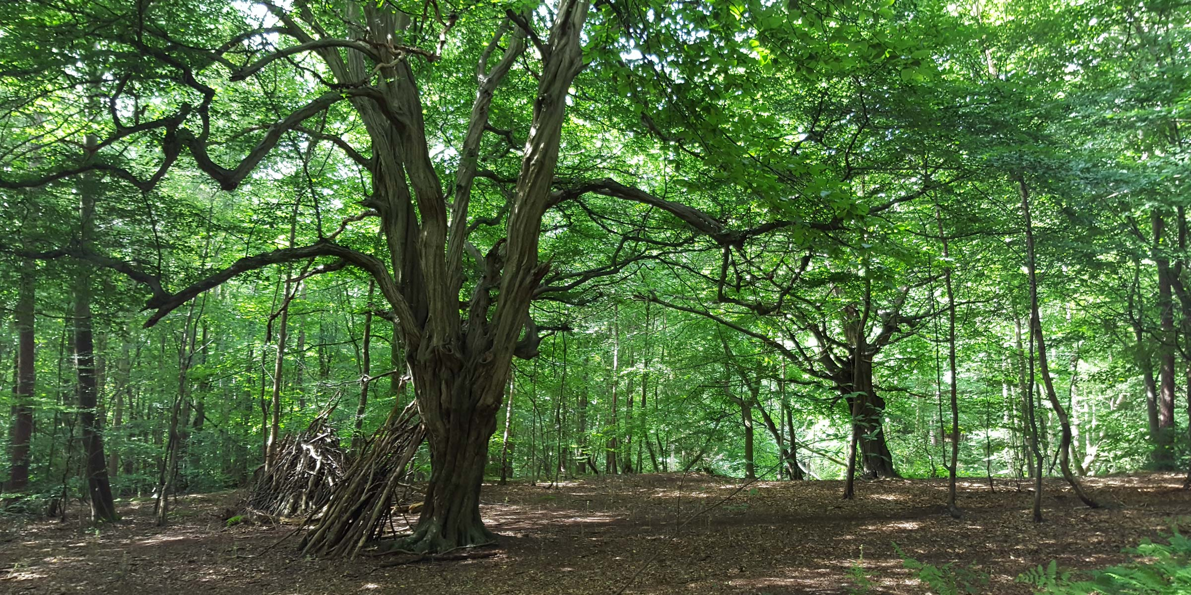Arboriculture & Landscape Management
