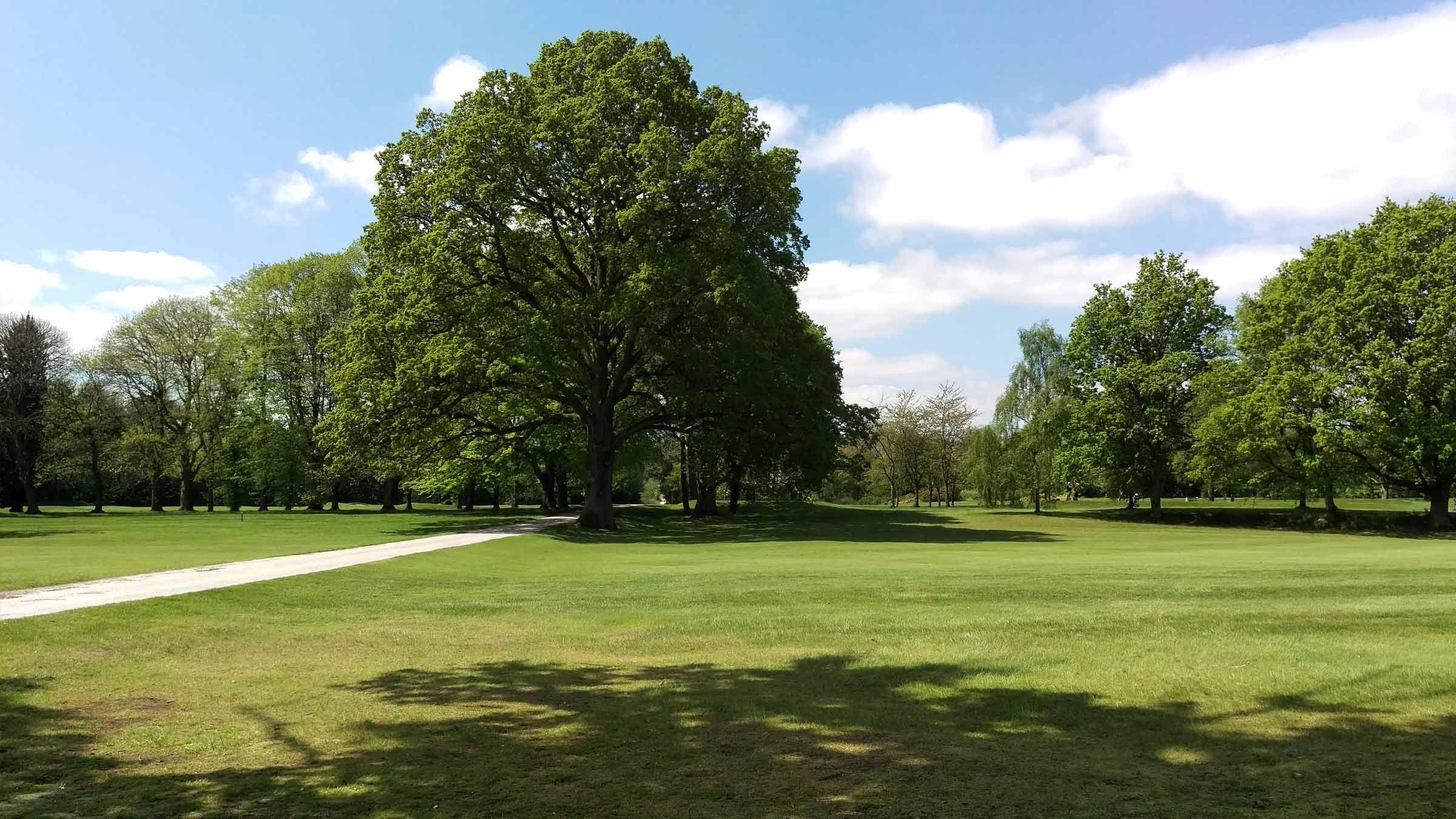 Golf course Arboricultural services