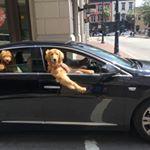 Just cruisin' in Savannah  #ebrsavannah #dogsofinstagram