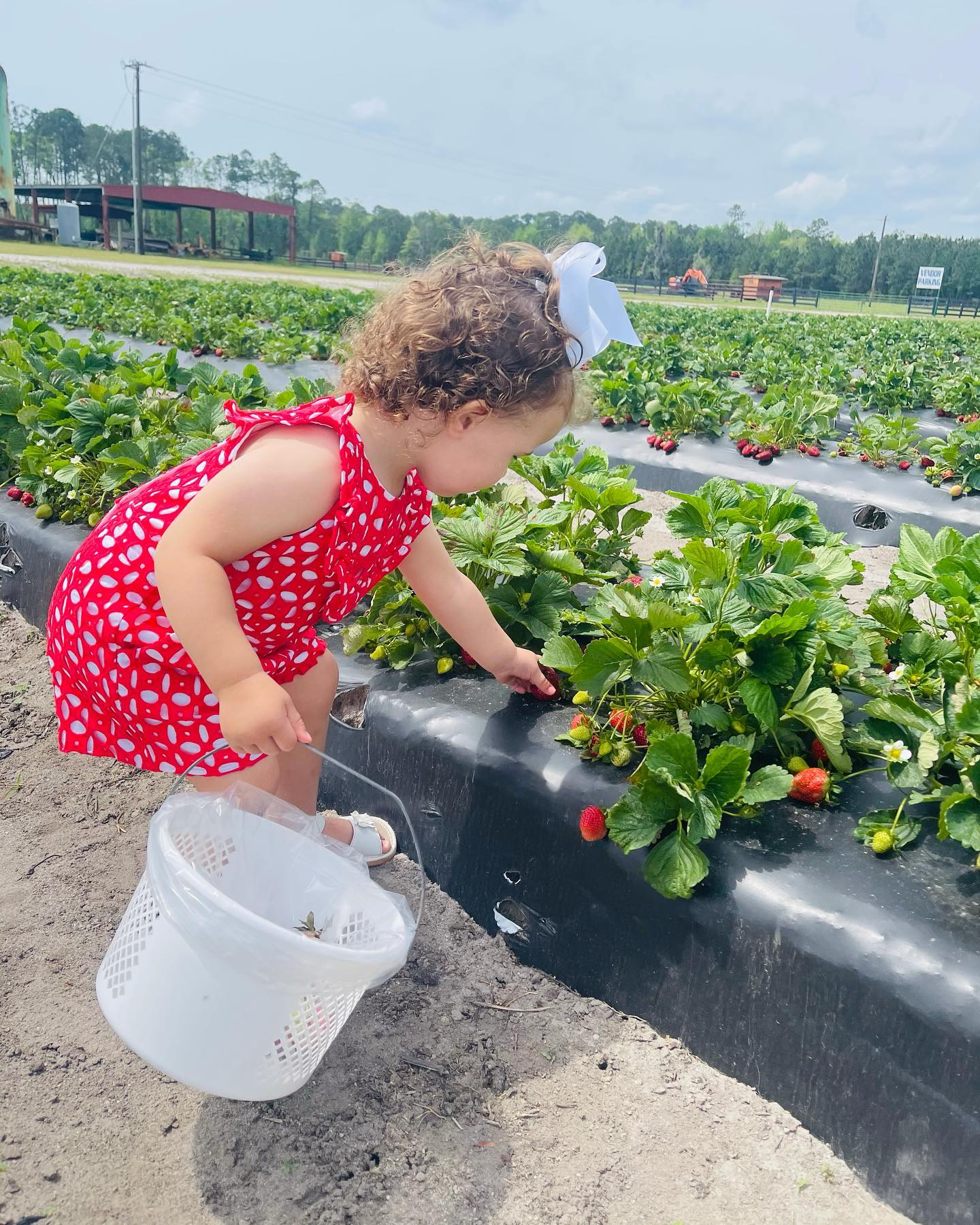 A fun family activity is picking strawberries at Ottawa farms!  Check out their Facebook page for hours!  #ebrsavannah #savannahrealestate