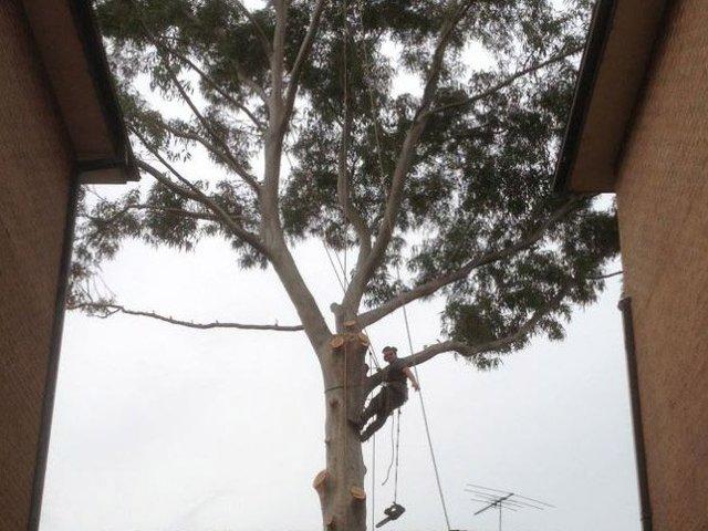 Professional tree services Sydney
