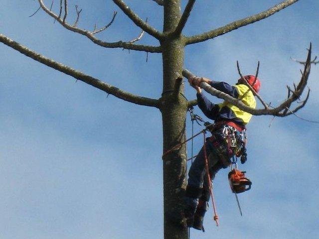 Tree services Sydney