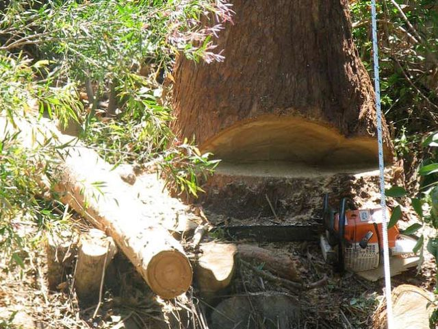 Emergency tree services Sydney