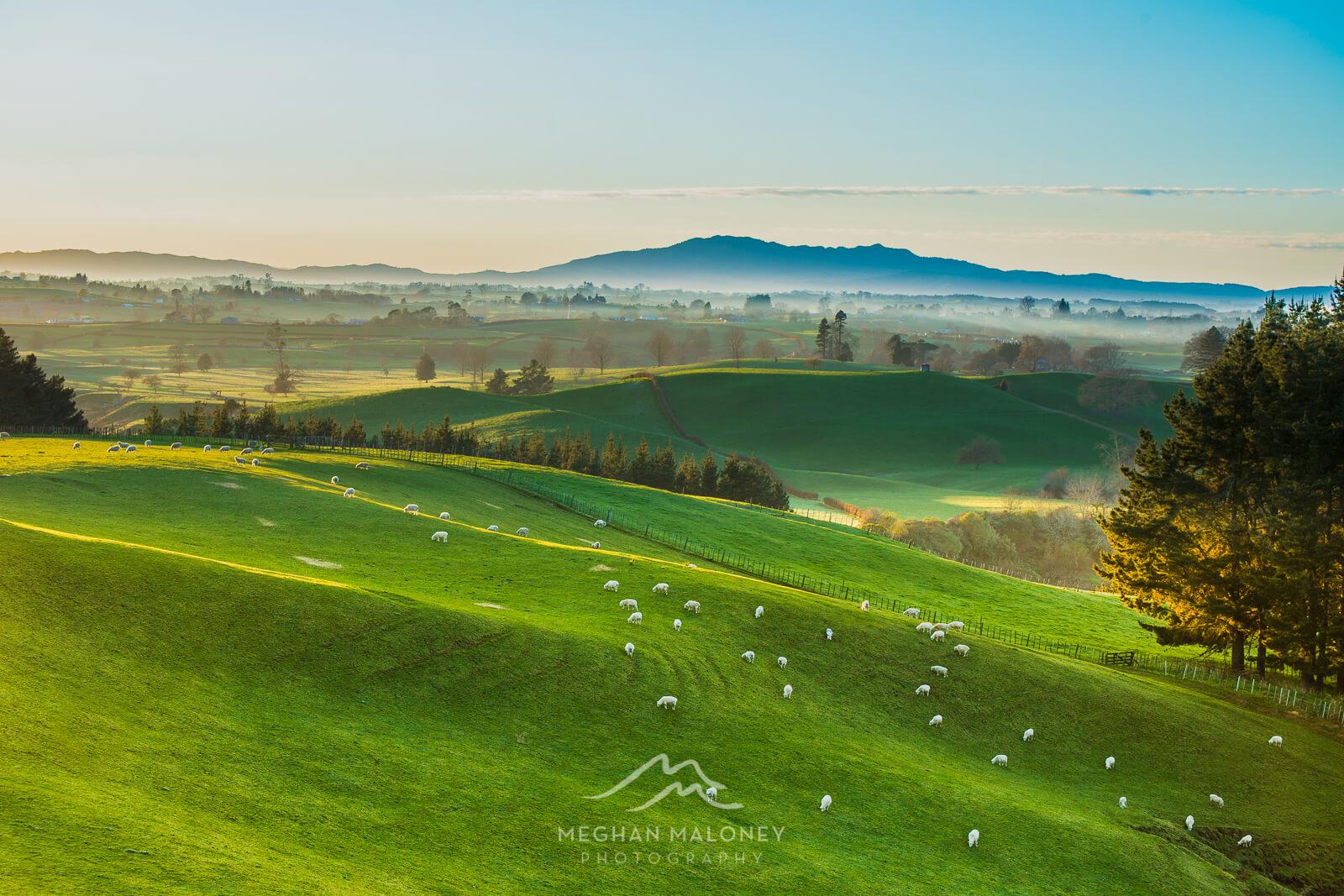 Waikato Landscape Photography