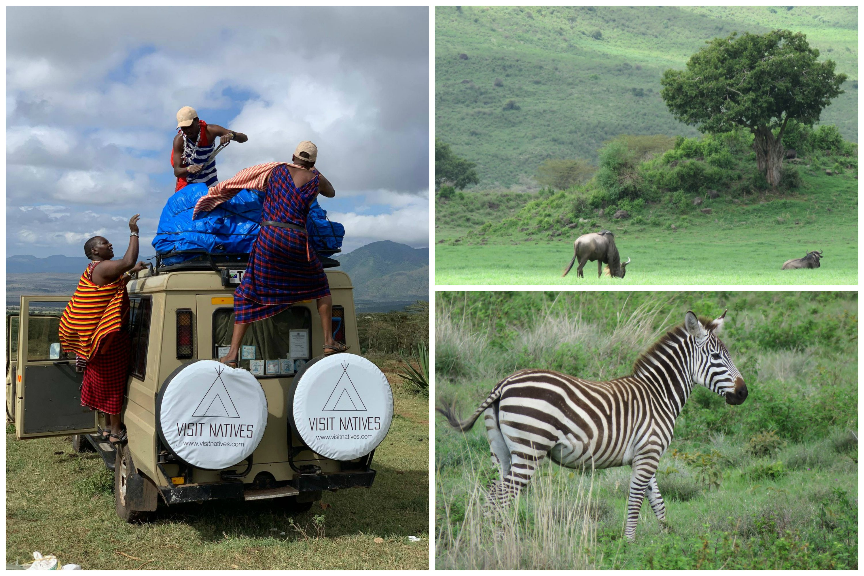 tanzania tour wild animals