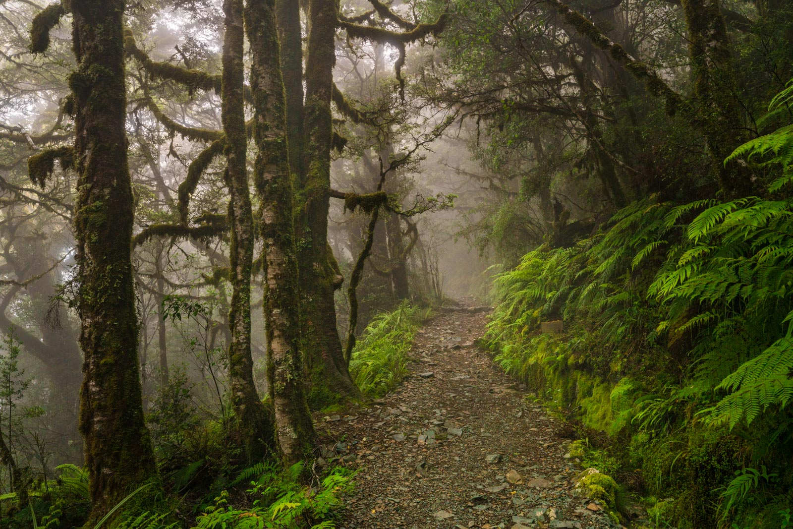 Routeburn Track Forest Mist
