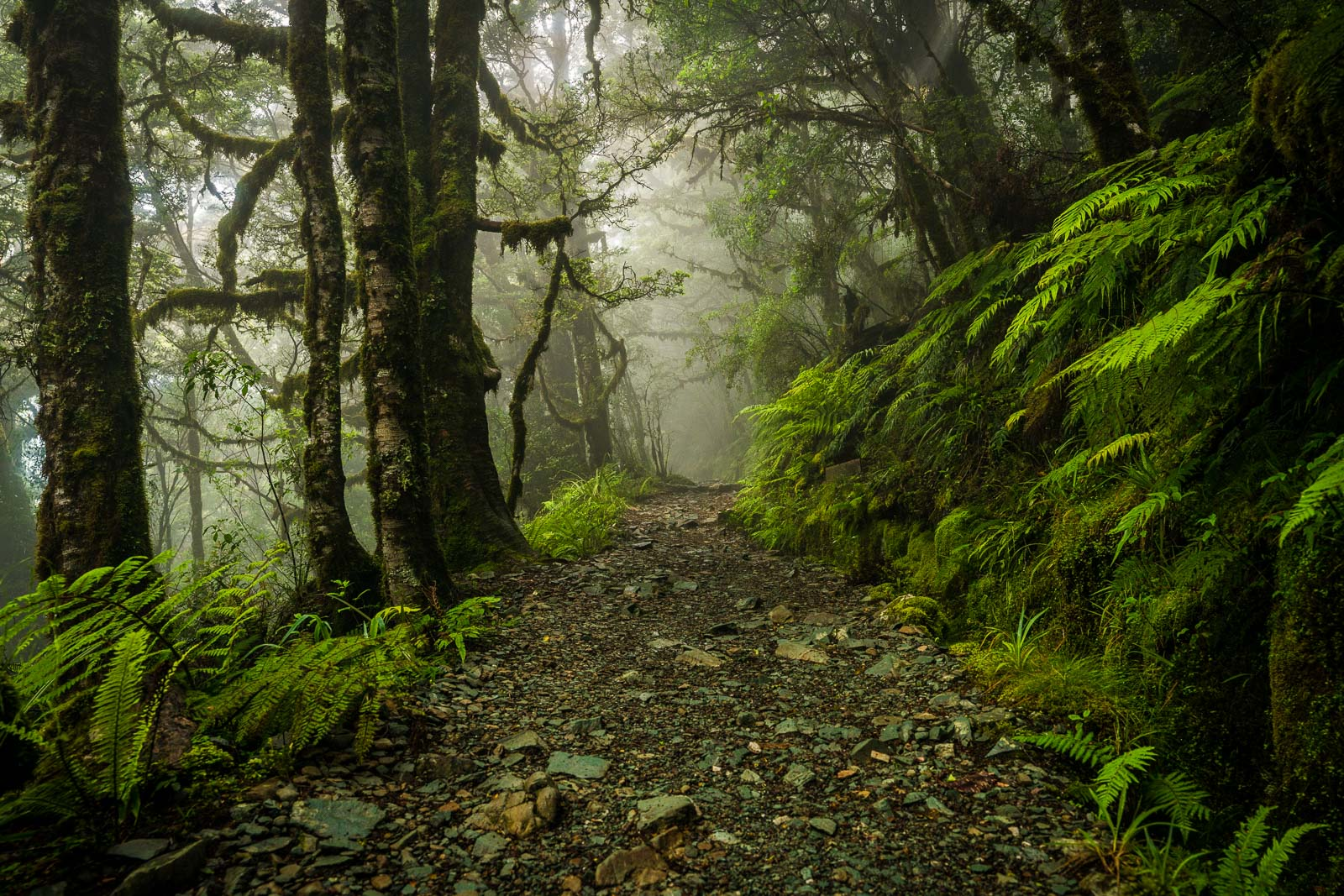 Routeburn Track Misty Forest