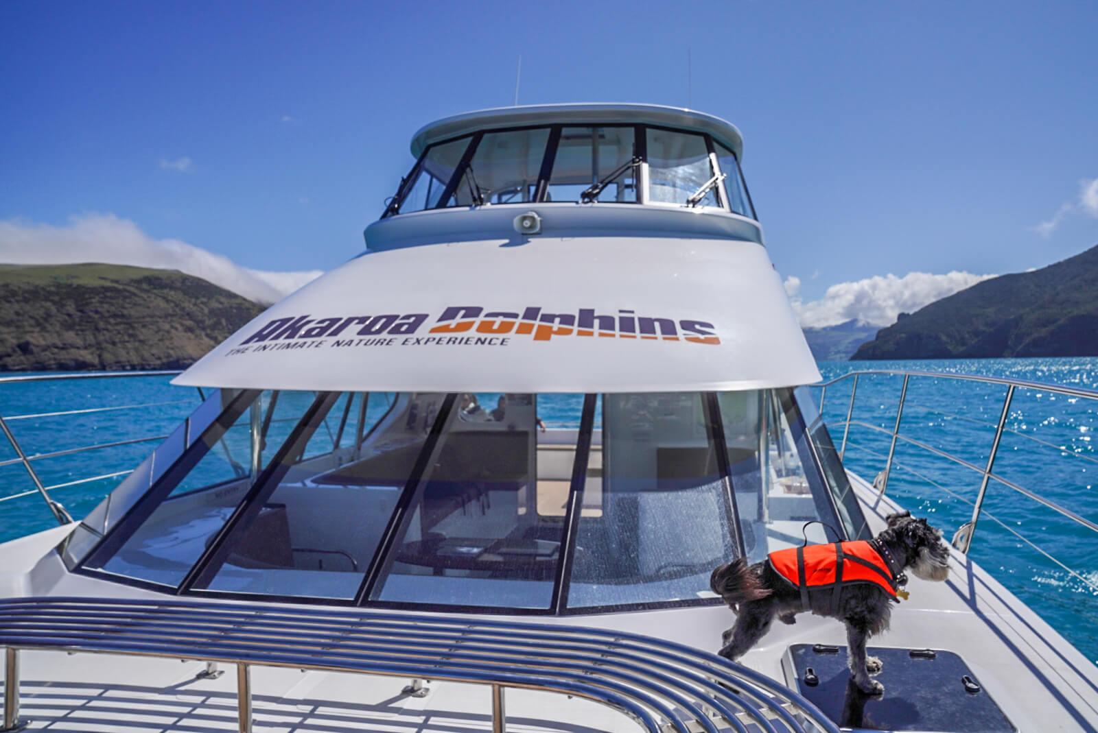 Akaroa Dolphins Cruise Dolphin Dogs