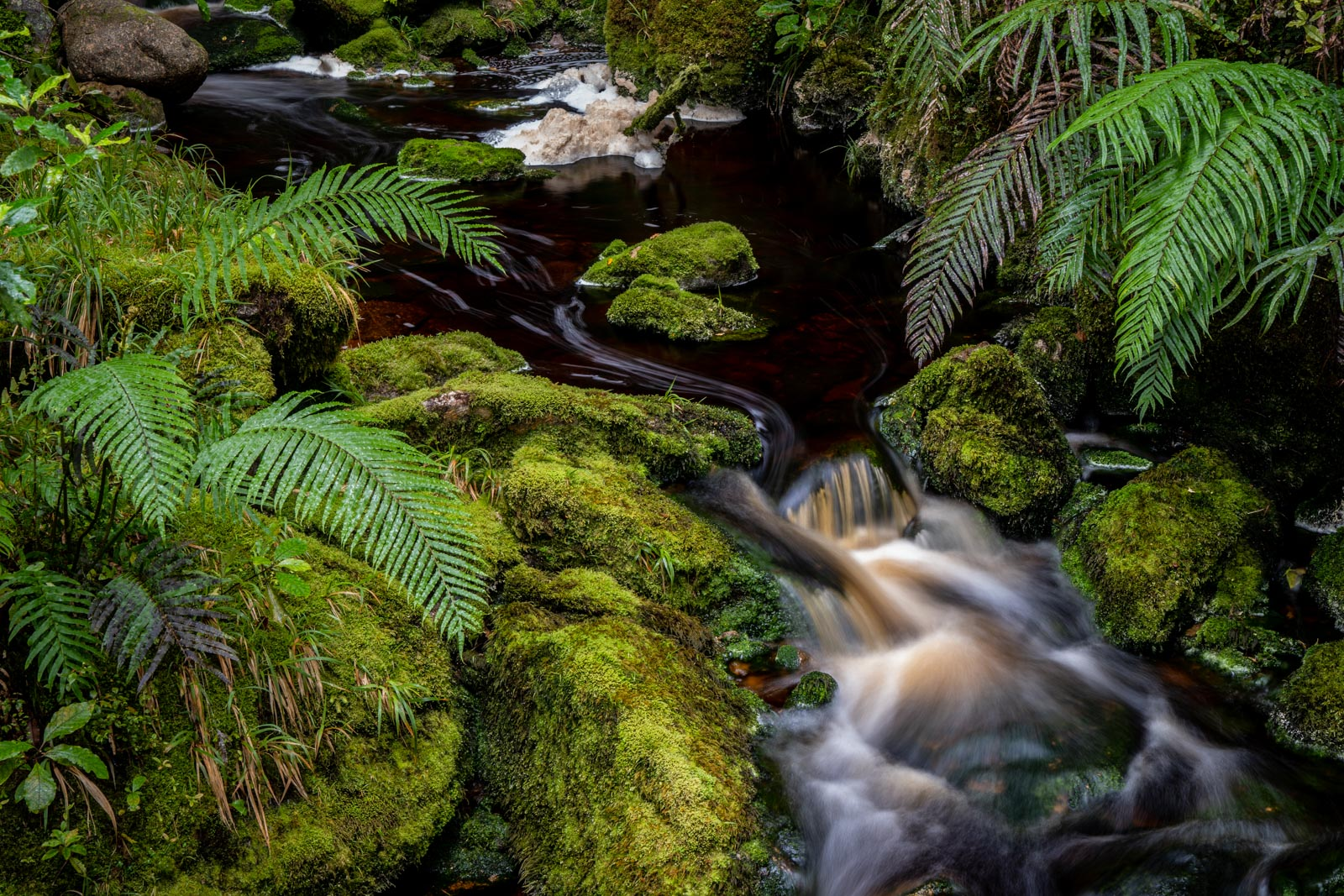 Oparara River Ferns Forest
