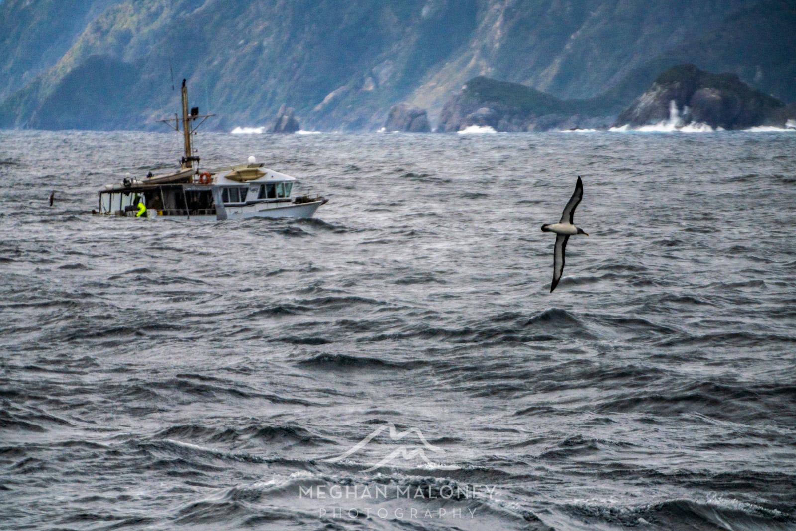 Doubtful Sound Tasman Sea Boat Albatross