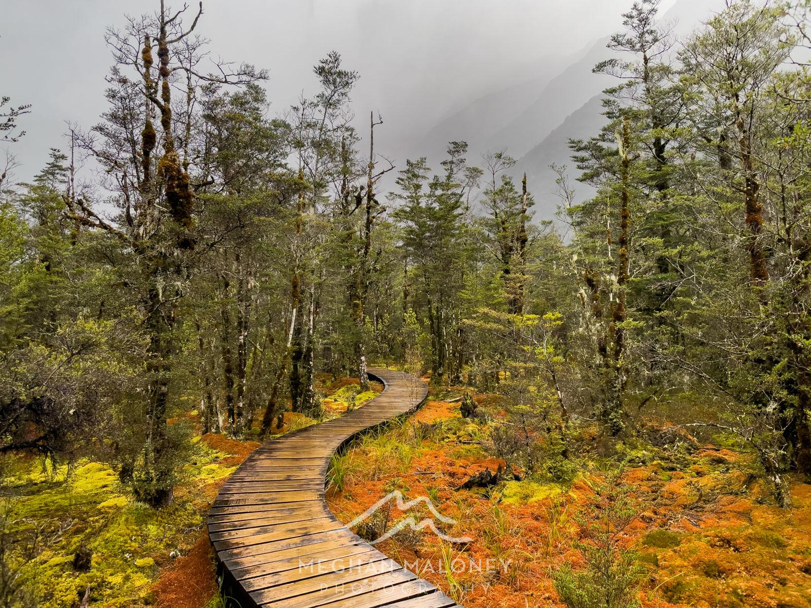 mossy wonderland milford track