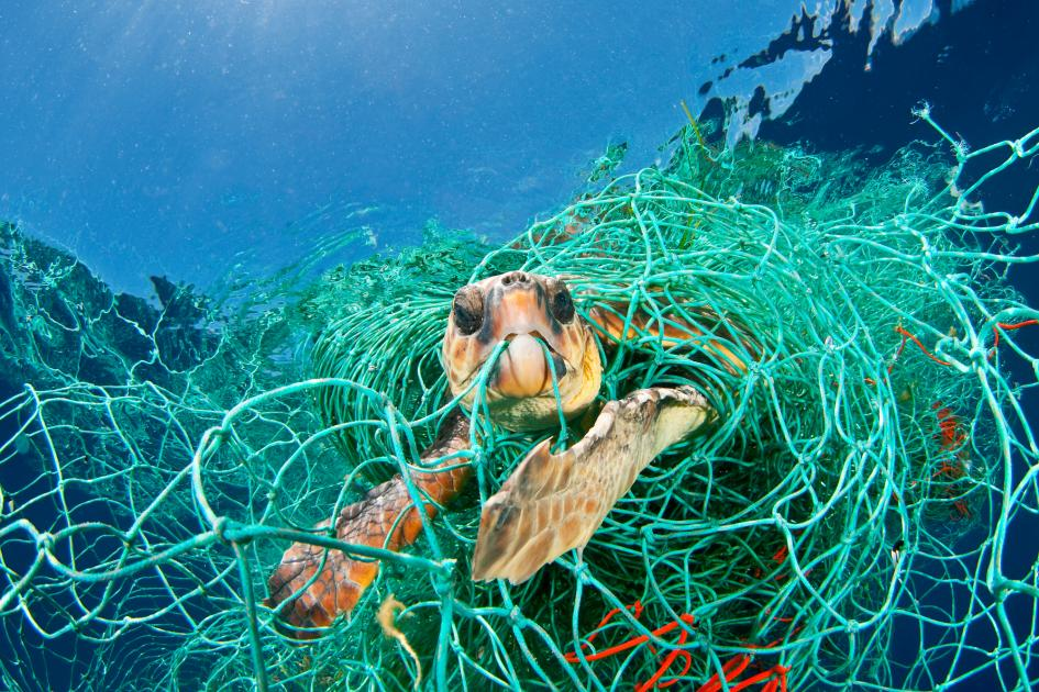 You can help our ocean