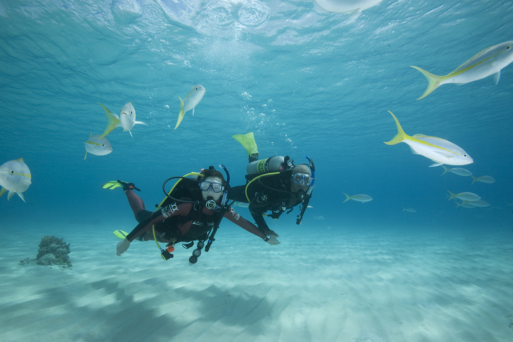 Which PADI course is best to start with