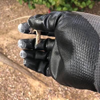 Pest control in Surprise, AZ