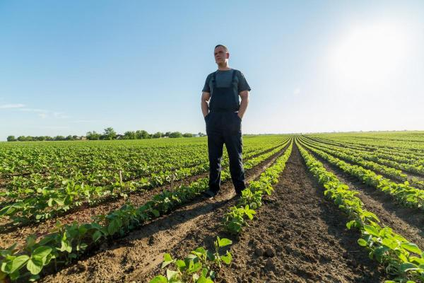 Little Rock Dicamba lawyers