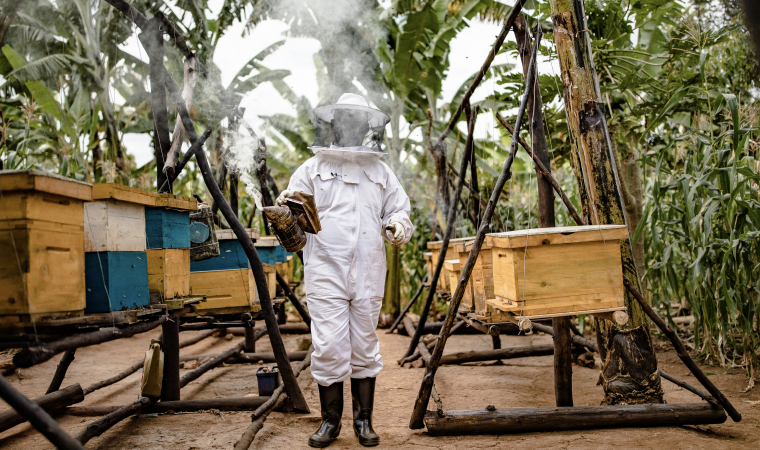 An ATIC worker smoking out bee hives