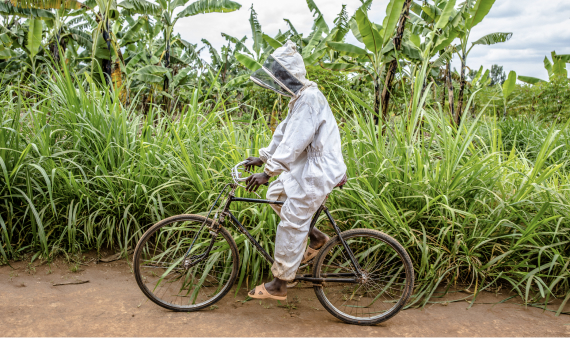 An ATIC beekeeper wearing his protective wear while biking down a dirt road toward the hives