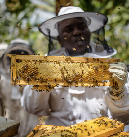 A beekeeper showing a honey rack from one ATIC bee box explaining the beekeeping process.