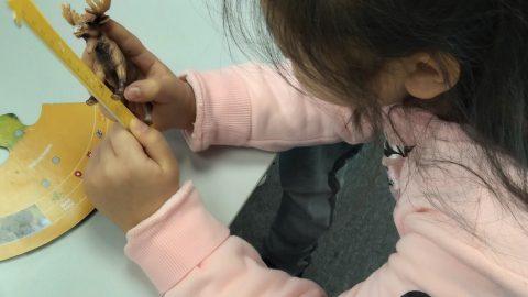 工業4.0時代的小工程師: 融入保育的STEM教育