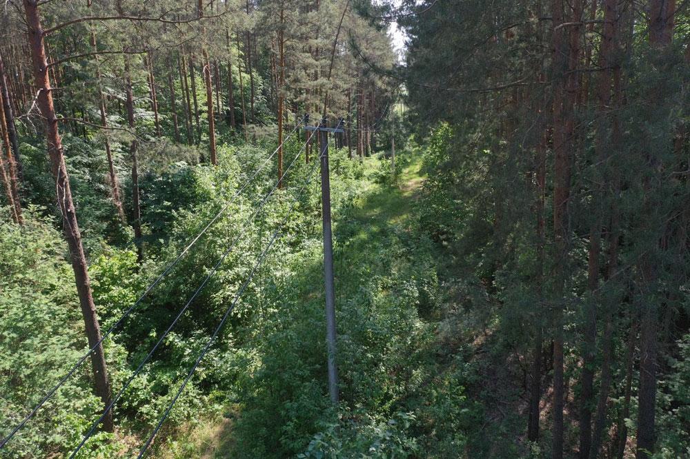 Rede eléctrica que passa por uma floresta na Lituânia