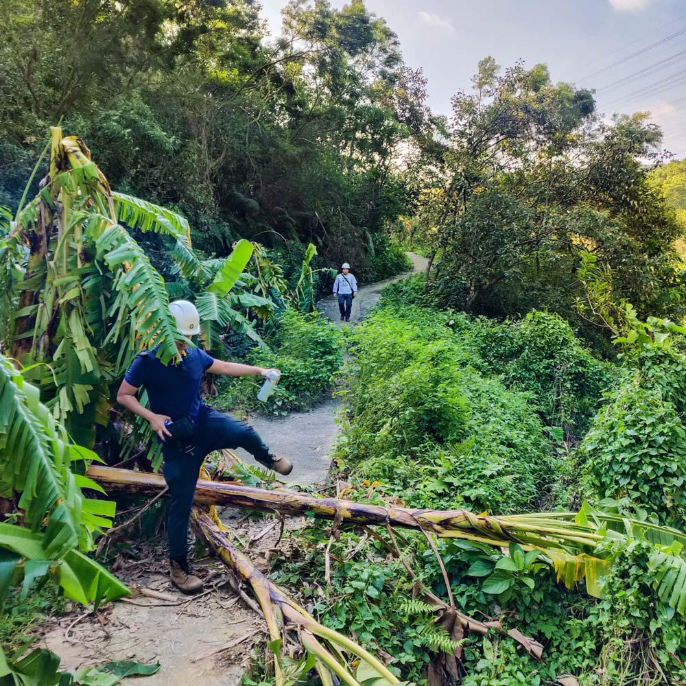 A CLP employee stepping over a fallen tree in Hong Kong