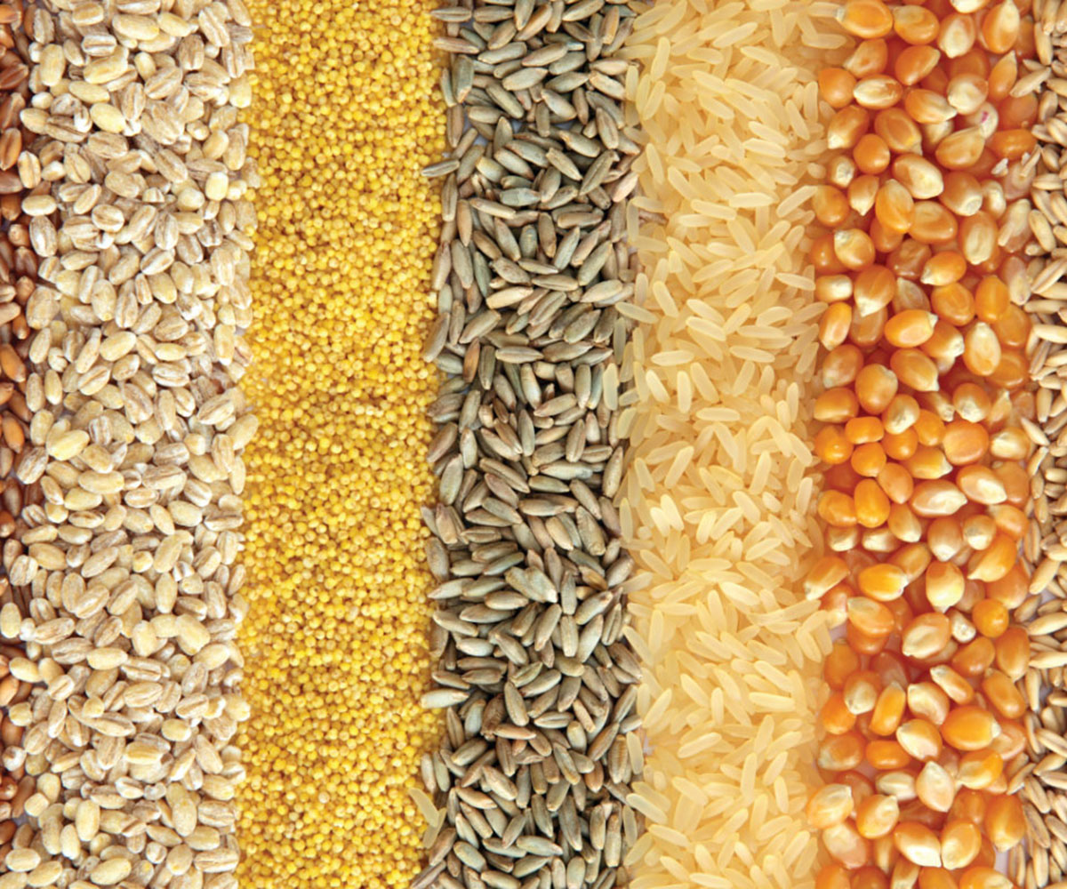 grains, seeds, and feeds in a pile