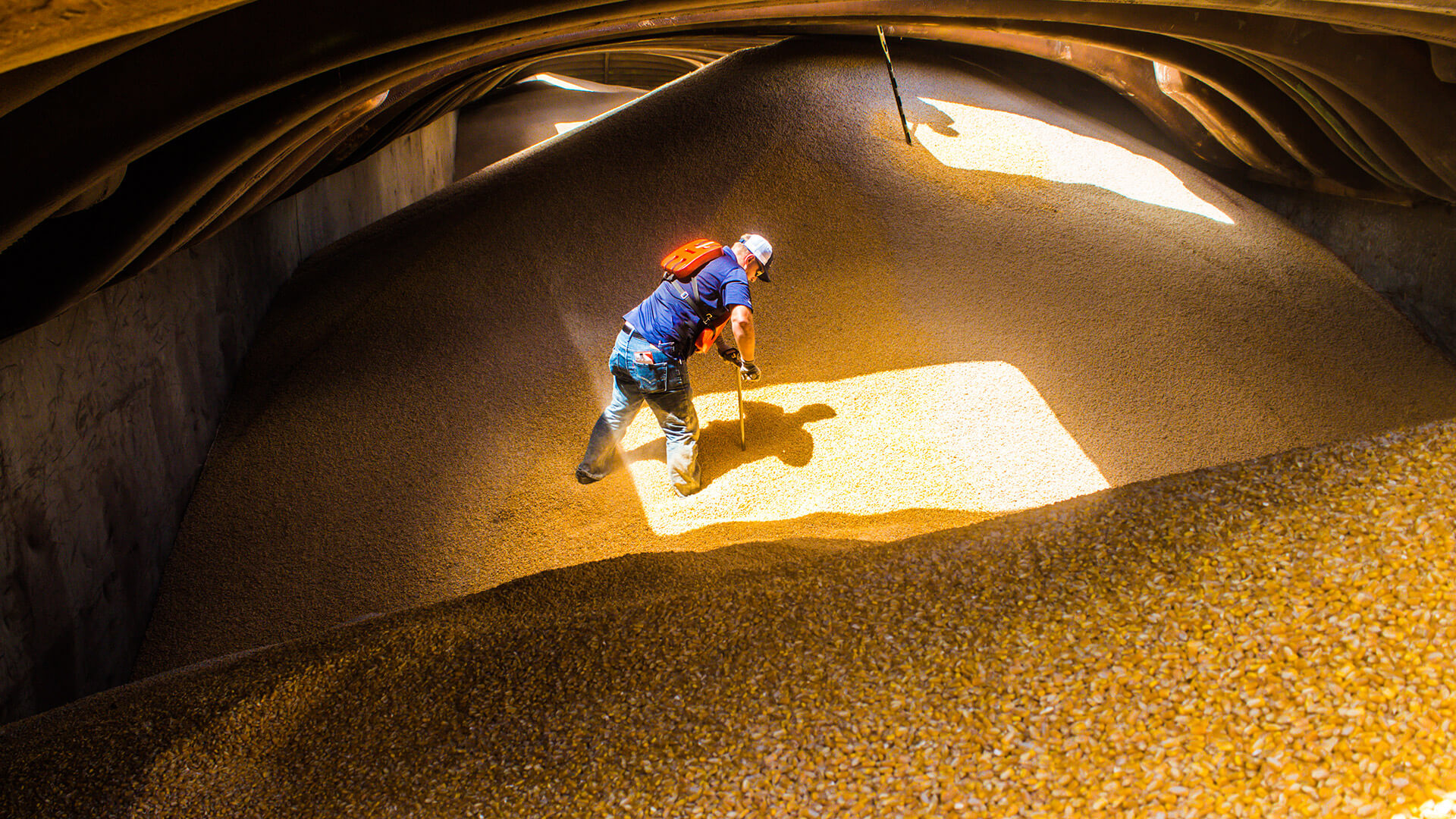 man standing in a pile of corn inspecting the quality