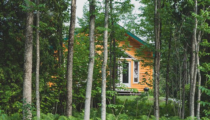 chalet cahcé dans la forêt