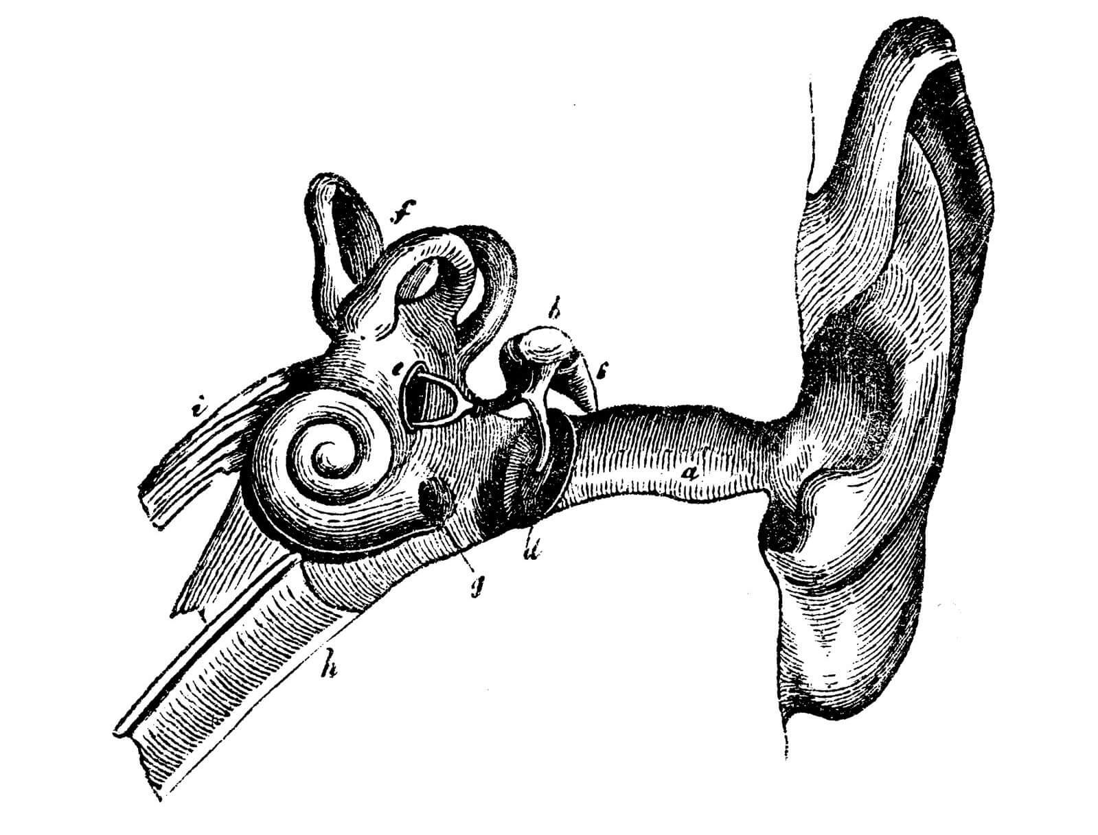 History of Hearing Loss Treatment
