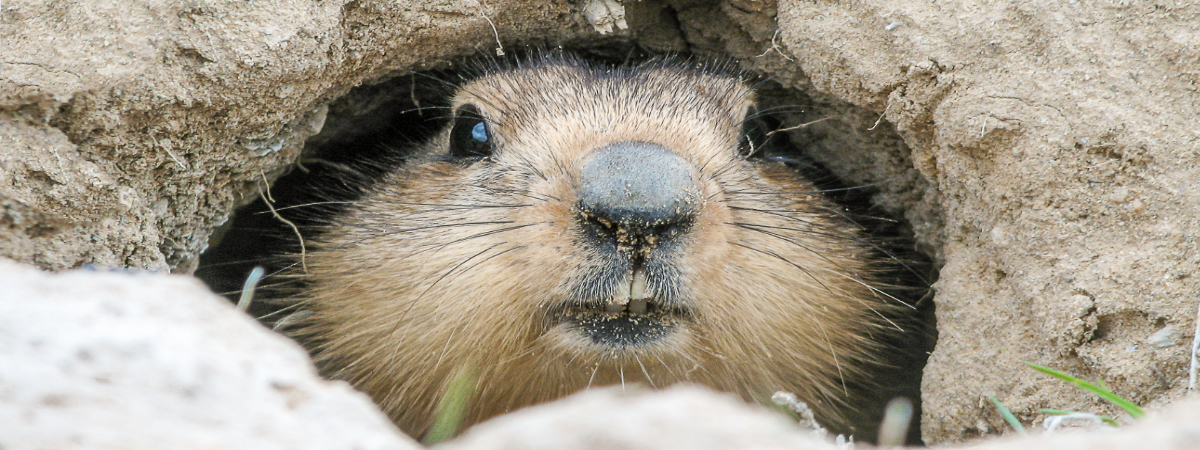 The March 3 Primary & The Importance of Groundhog Day